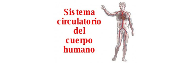 Sistema circulatorio y hemorroides